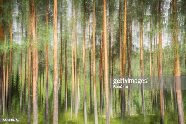 Pine forest - Abstract look