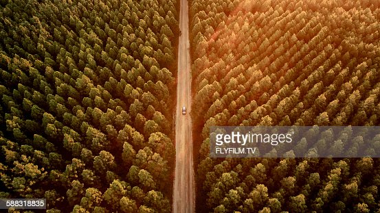 Pine Forest Drive