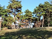 field in pine tree area