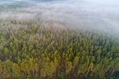 Pine forest view from above. Forest with mist aerial drone view. Forest background.