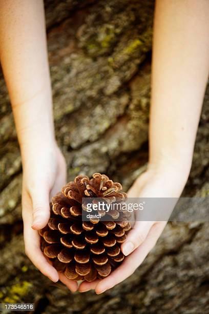 Pine Hände