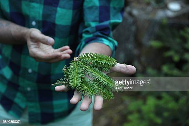Pine Needles, Deer Isle, Maine