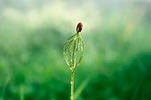 Pine seedling, close up, lens flare