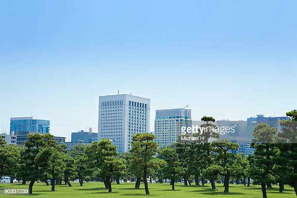 Pine tree and building in Kasumigaseki