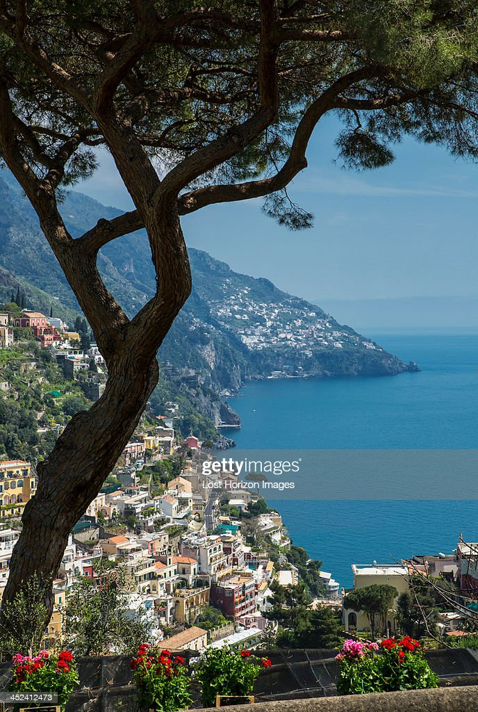 Pine tree and houses on hillside, Positano, Amalfi Peninsula, Campania, Italy