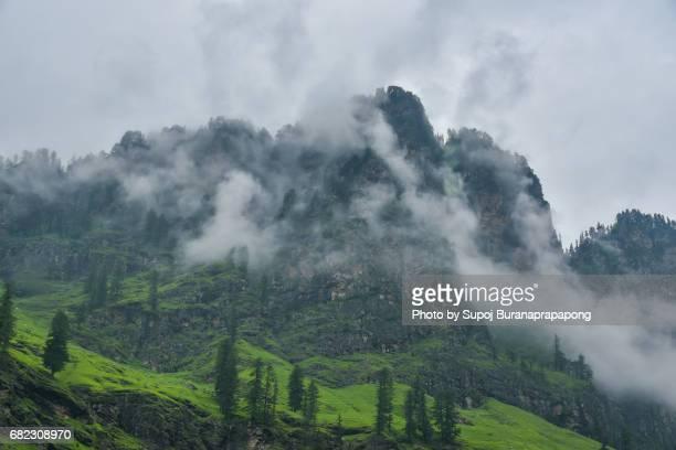 Pine tree in rainy day with mountain range  in background ,Manali village,Himachal Pradesh,india
