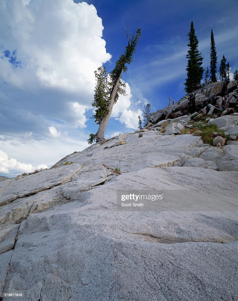 Pine Tree on Granite Slope