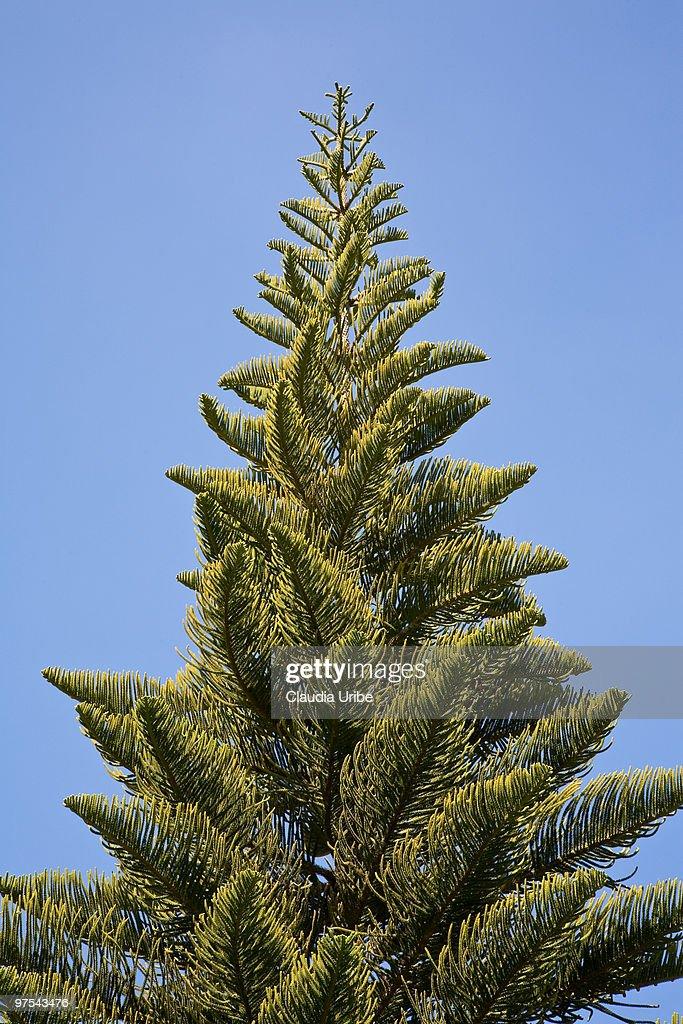 top pin tree of - photo #31