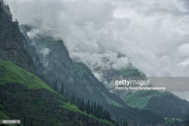 Pine tree with mountain range in Himachal Pradesh , india