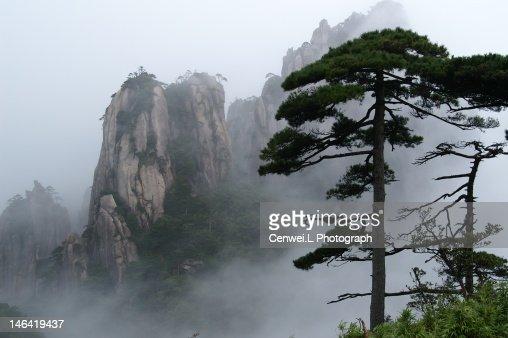 Pine trees and foggy stone mountain