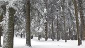 Snow, Winter, Blizzard, Season, Snowflake