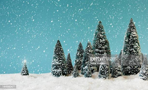 Pine trees covering by snow, studio shot