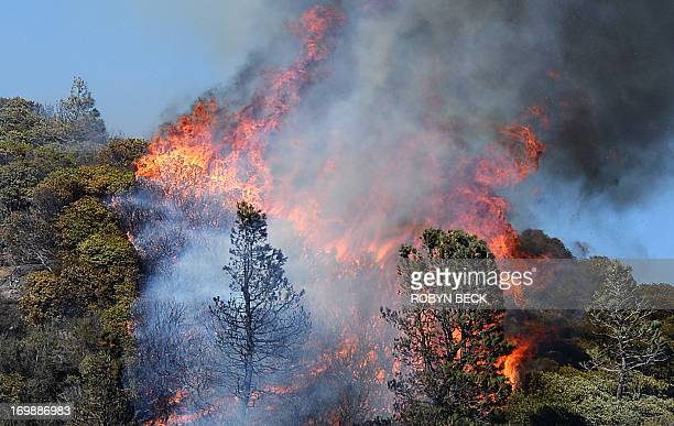 Pine trees ignite as a flare up breaks a containment line at the Powerhouse Fire near Lake Hughes California approximately 66 miles north of Los...