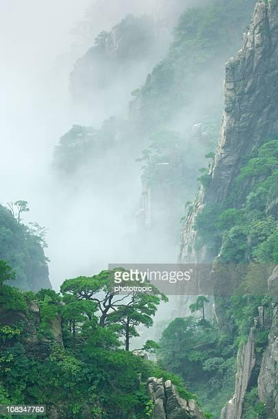 pine trees de nuage sur le mont Huangshan