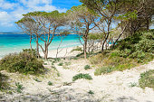 pine forest by the shore in Maria Pia beach, Alghero