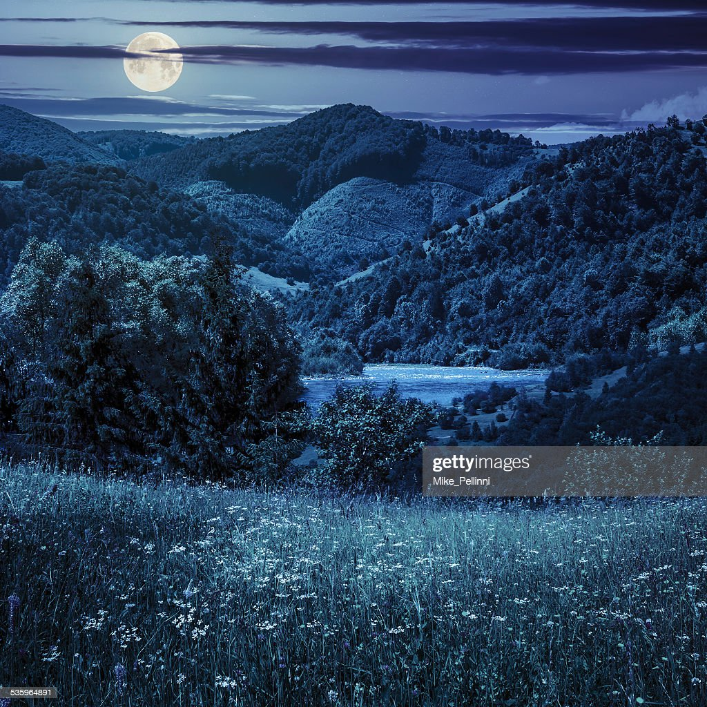 pine trees near meadow in mountains at night : Stock Photo