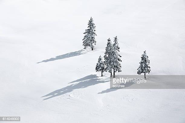 Pine Trees On White Field