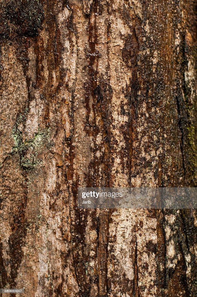 Pine Trunk : Stock Photo