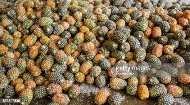 Pineapple fruits before the production of pineapple juice at beverages manufacturer Kevian Kenya Ltd on May 18 2017 in Thika Kenya
