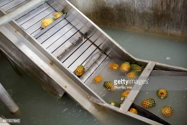 Pineapples are transported from a water basin via a conveyor belt Production of pineapple juice at beverages manufacturer Kevian Kenya Ltd on May 18...