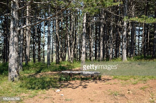 Pines and bench : Stock Photo