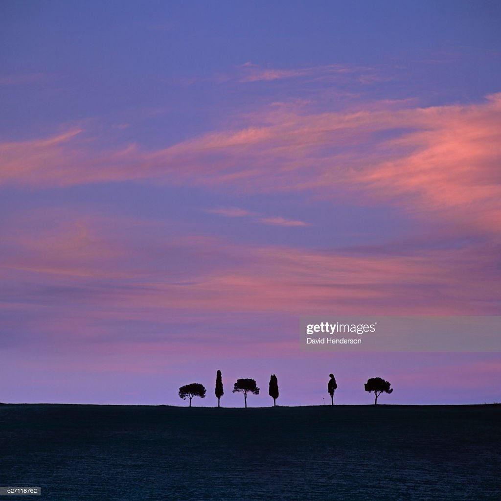 Pines and poplars against pink sky : Stockfoto