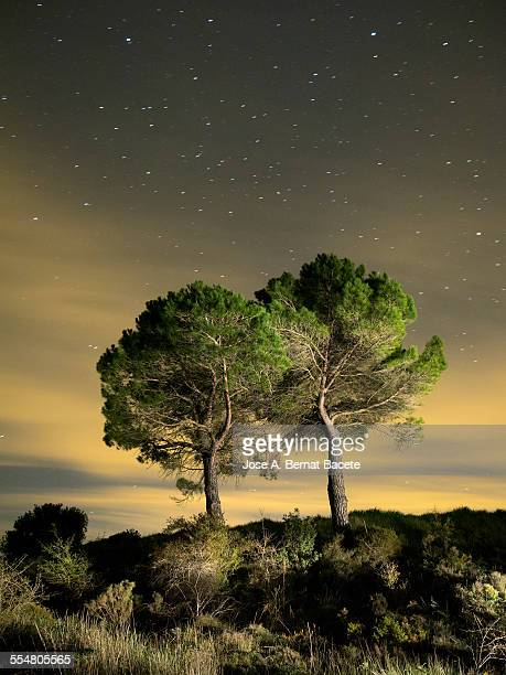 Pines in the top of a mountain in the night