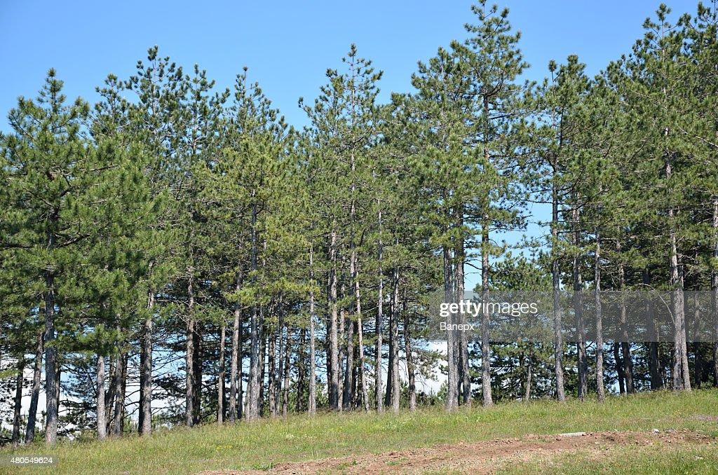 Pembroke Pines : Foto de stock