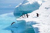 Família de pinguins saltando sobre bloco de gelo na Antártica