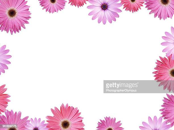 Pink and Violet flower frame with copyspace XXL