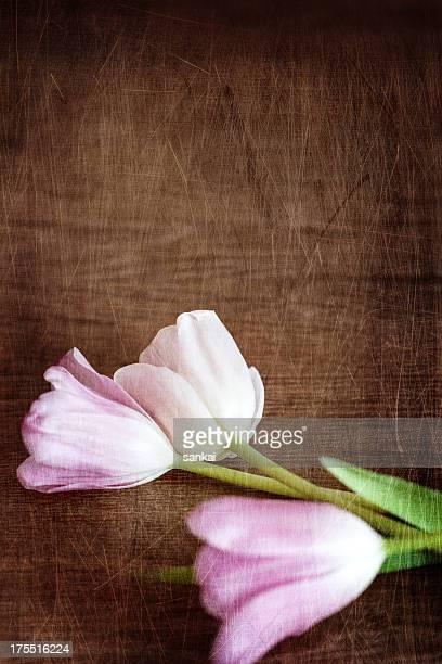 Roses et tulipes blanches sur le parquet en bois