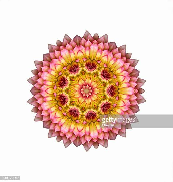 Pink and Yellow Dahlia Mandala