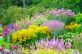 Beautiful summer flowerbeds. Yellow and pink flowers in lavish garden. Lush foliage in Botanical garden of Gothenburg, Sweden.