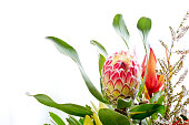 Pink and yellow protea flower and leaves against white background with copy space