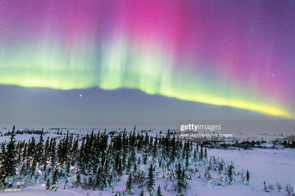 Pink aurora over boreal forest in Canada.