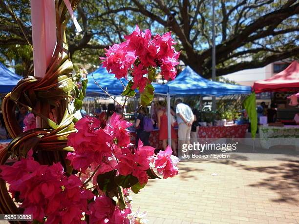 Pink Bougainvillea At Marketplace