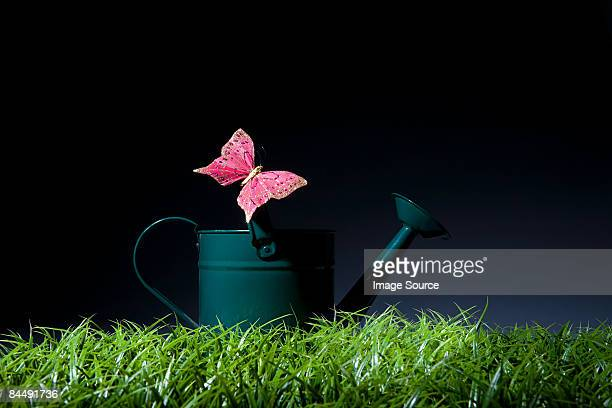 Pink butterfly on a watering can