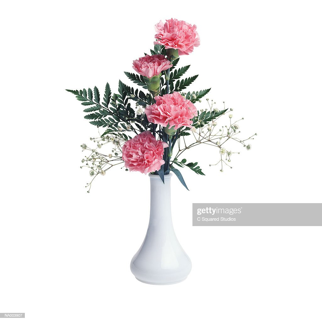 Pink Carnations in White Vase : Stock Photo