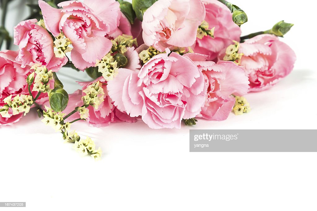 Pink carnations : Stock Photo