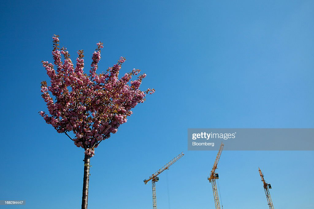 A pink cherry tree in full bloom is seen near to construction cranes rising from a building site in Berlin, Germany, on Tuesday, May 7, 2013. Germany, Europe's largest economy, reported growth in the construction industry during April, according to Markit Economics. Photographer: Krisztian Bocsi/Bloomberg via Getty Images