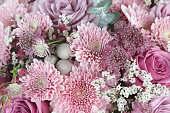 Pink chrysanthemum, roses and astrantia flowers background
