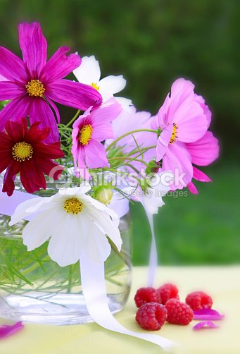 Cosmea Rosa Bouquet Foto Stock Thinkstock
