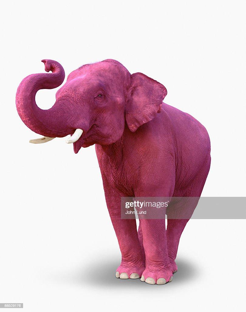 Pink Elephant : Stock Photo