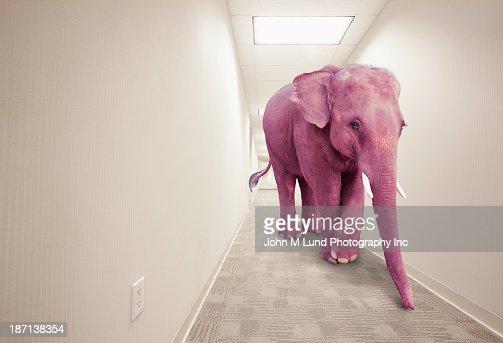 Pink elephant walking in hallway