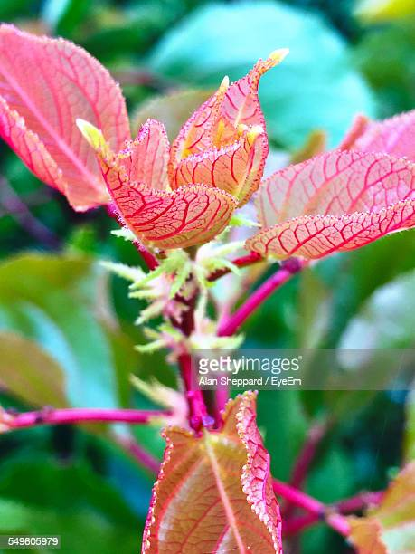 Pink Exotic Plant