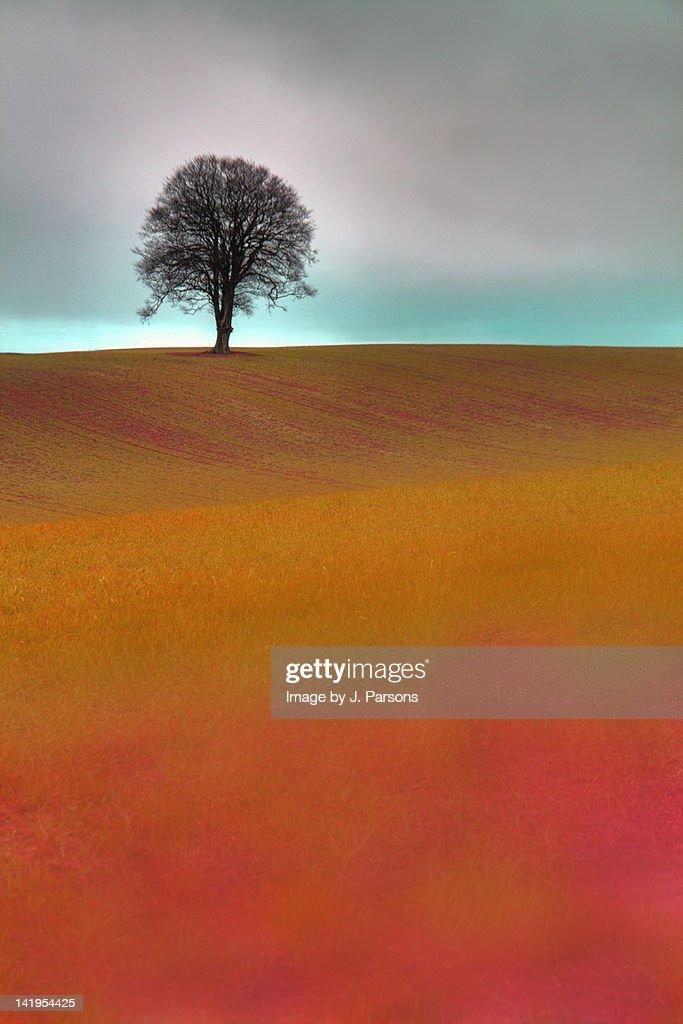 Pink fields : Stock Photo