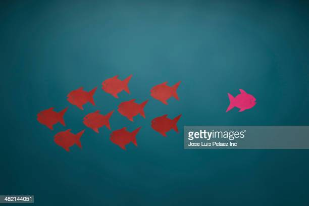 Pink fish swimming in opposite direction from red fish