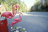 Pink Flamingoes in and Near Red Garbage Can