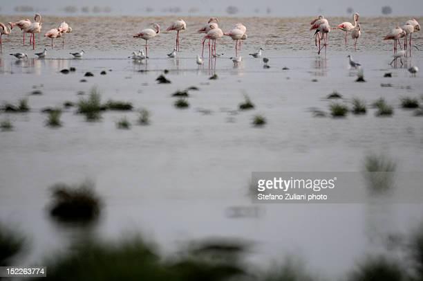 Pink flamingos and seagulls