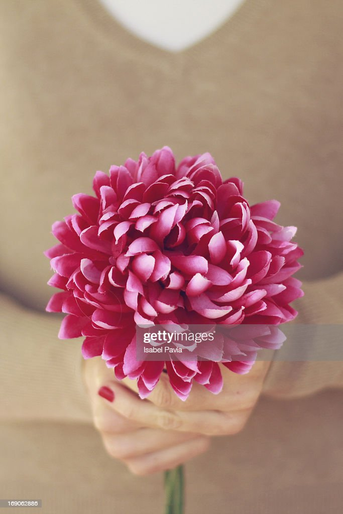 Pink flower in woman´s hands : Stock Photo